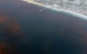 Investigadores de la ESPOL capacitan sobre riesgos de las mareas rojas